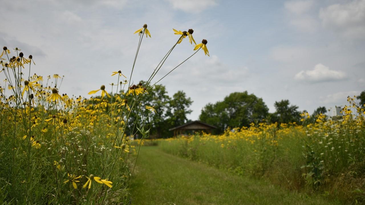 prairie garden flowers